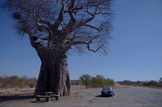 Gallery: Zimbabwe