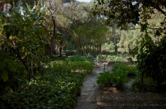 The kitchen gardens, where much of the food for the lodge is grown.