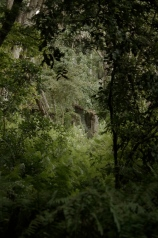 Ruins in Jozani Forest, left by some long forgotten colonial.